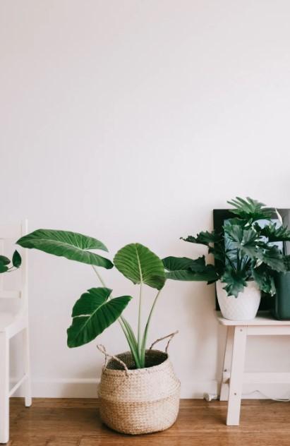 Hus-planter